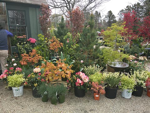 Nursery: Trees, Shrubs and Perennials