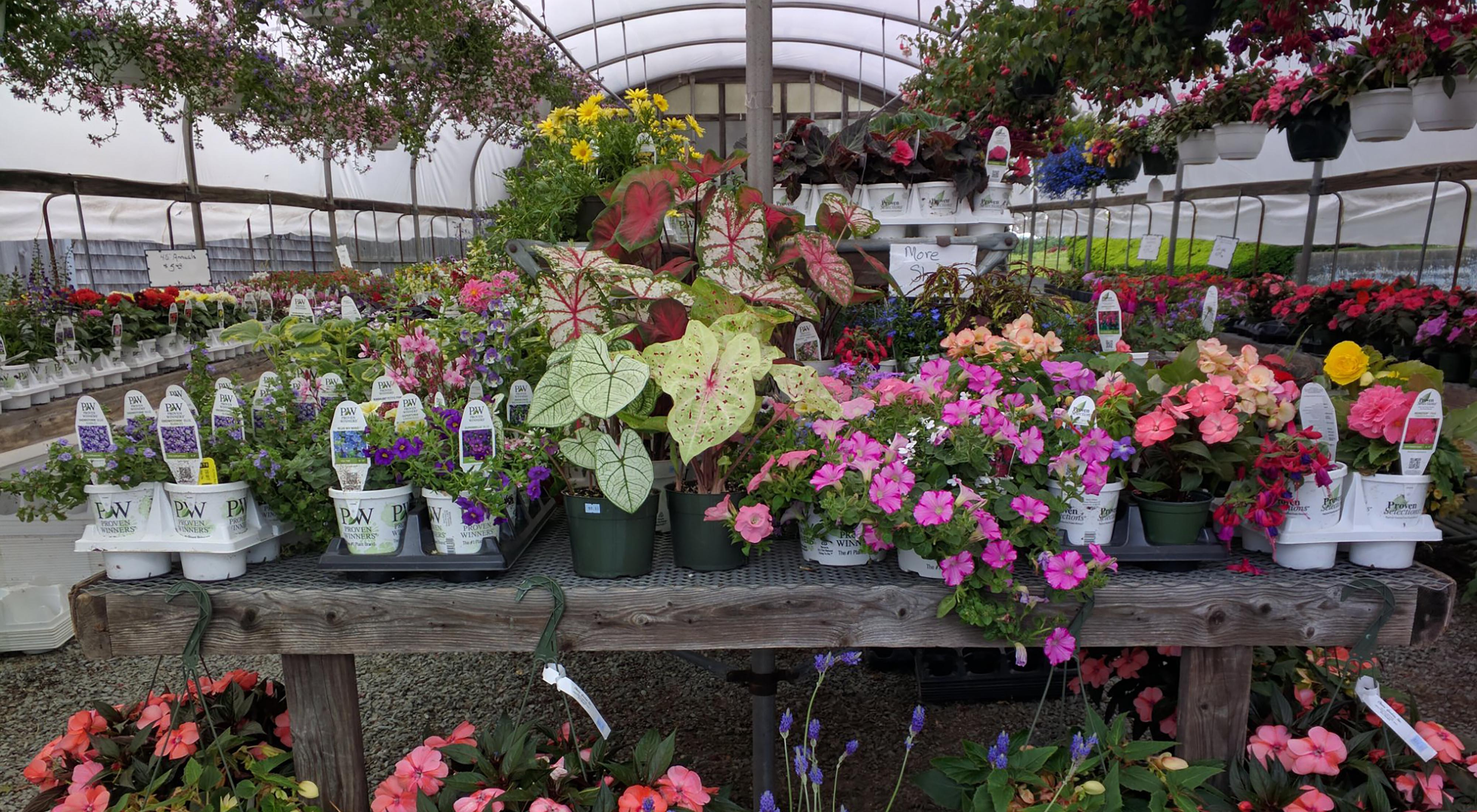 chaves u0027 gardens florist nursery and garden supply store