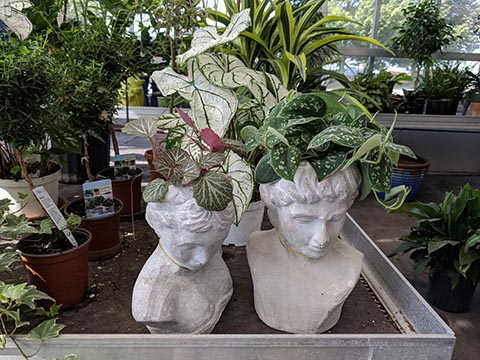 Statuary planters shaped like busts with plants coming out the top